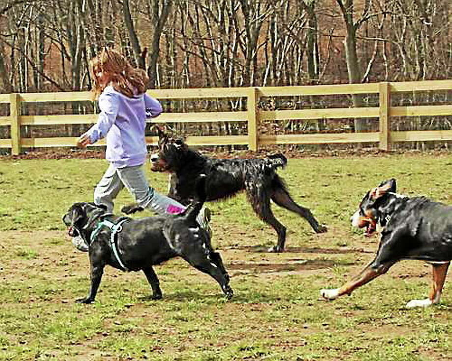 Photo by Chris Barber Some Cromwell dog owners are hoping the town will consider building a dog park. Photo: Journal Register Co.