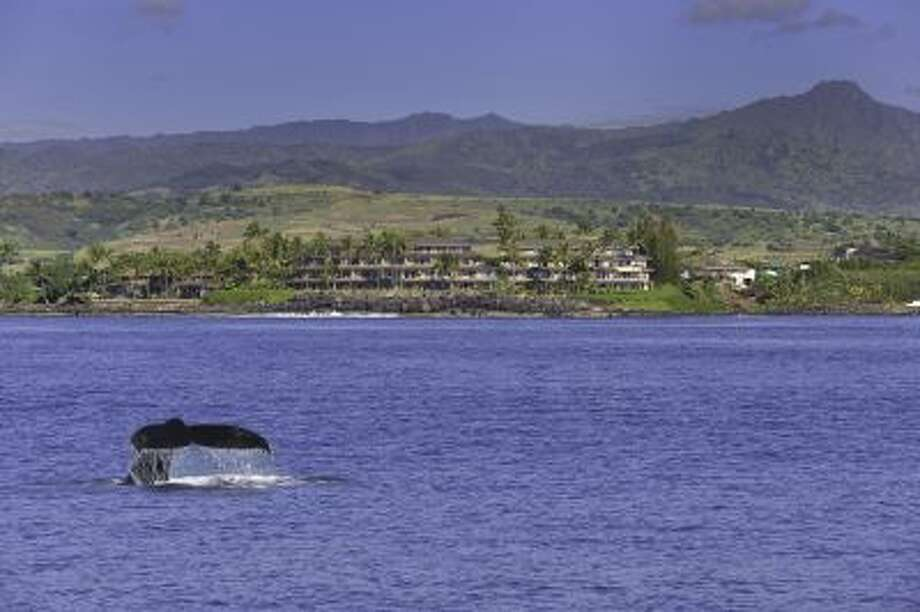 x-default Photo: Whalers Cove Resort / mmartin@whalerscoveresort.com
