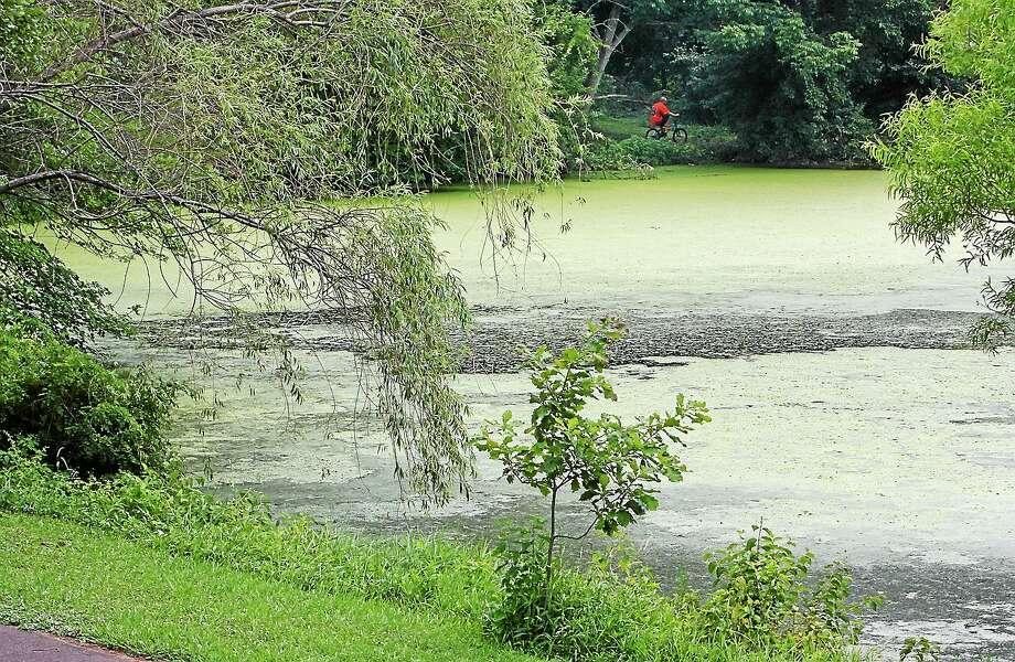 Algae Photo: File Photo