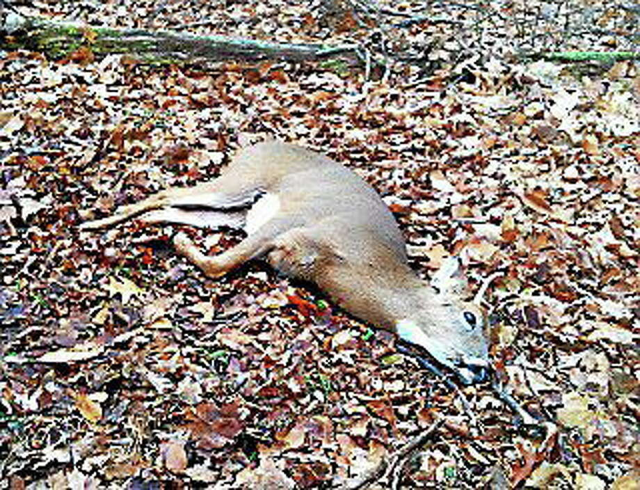 Courtesy Stephan Devoto Middletown Planning and Zoning Commissioner Stephan Devoto came upon this mortally wounded buck last year near Mount Higby and euthanized him. Photo: Journal Register Co.