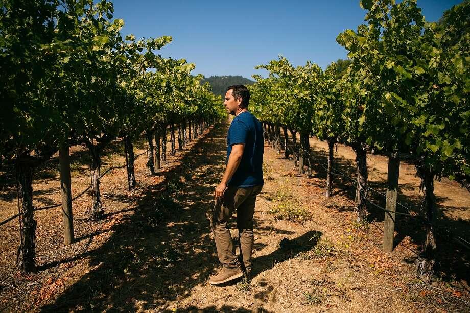Winemaker Andy Erickson walks around the To Kalon Vineyard in Oakville. Photo: Mason Trinca, Special To The Chronicle