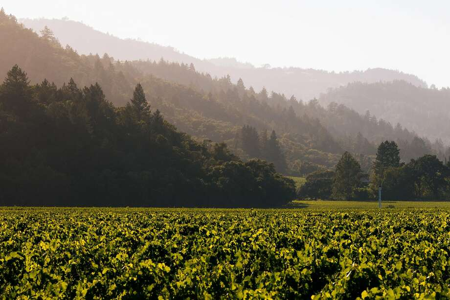 To Kalon Vineyard photographed in Oakville, Calif. Tuesday, July 18, 2017. Photo: Mason Trinca, Special To The Chronicle
