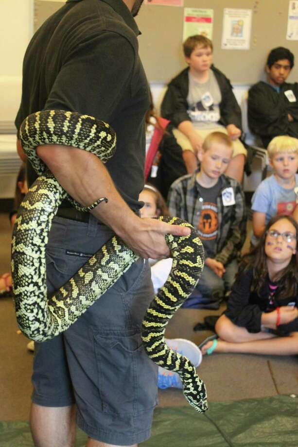 Nagini, the snake in Harry Potter lore, will be well represented in Wilton Library's Celebrating 20 Years of Harry Potter fundraiser from 9 a.m. to 3 p.m. on Tuesday, Aug. 29. The day-long camp will feature everything Harry Potter with potions, magical creatures, sorting hat and so much more. Photo: Contributed Photo / Wilton Library