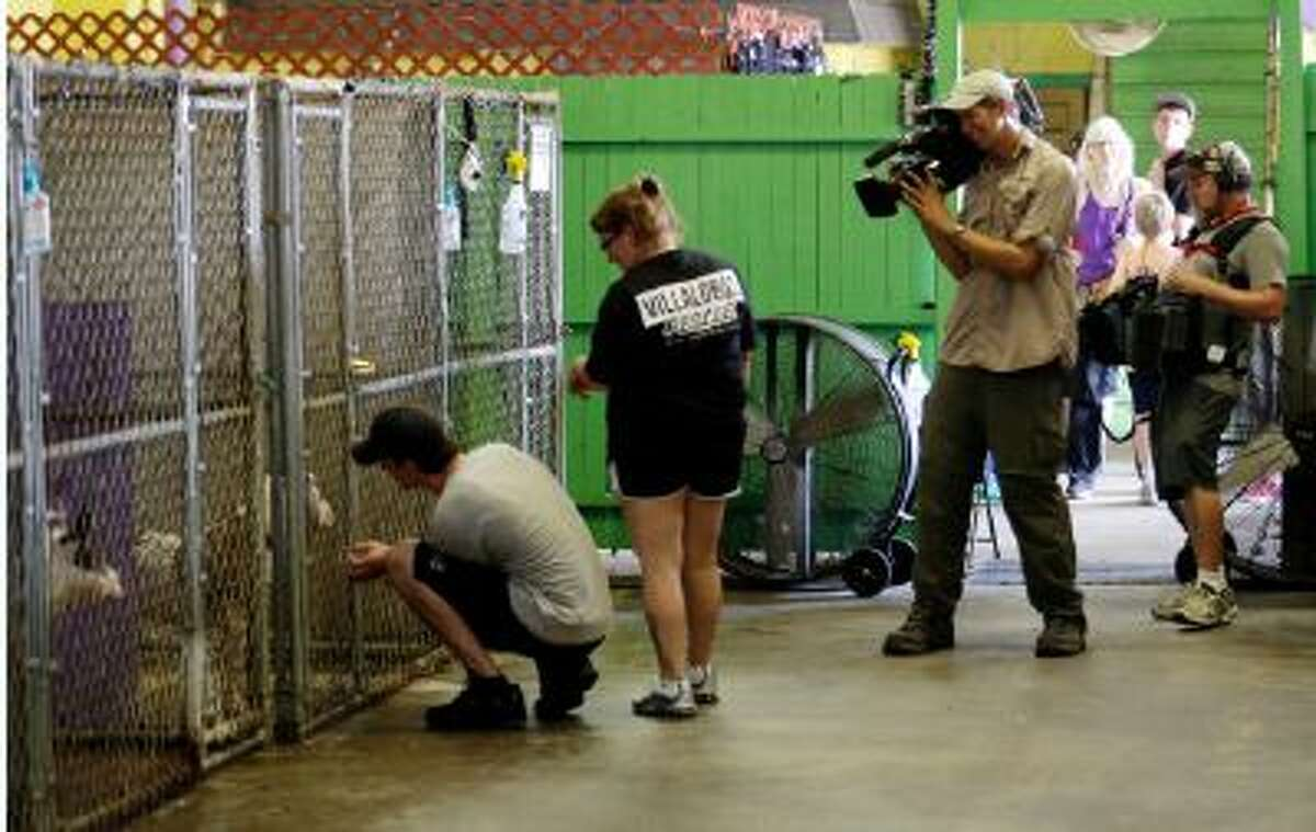 """In this Oct. 10, 2013, to right photo, from left, Lee and Brandi Williams, of Alma, Ark., who are seeking to adopt a pit bull, look at dogs as Tia Maria Torres (not shown), star of Animal Planet's """"Pit Bulls and Parolees,"""" films an episode of the show's fifth season in New Orleans."""