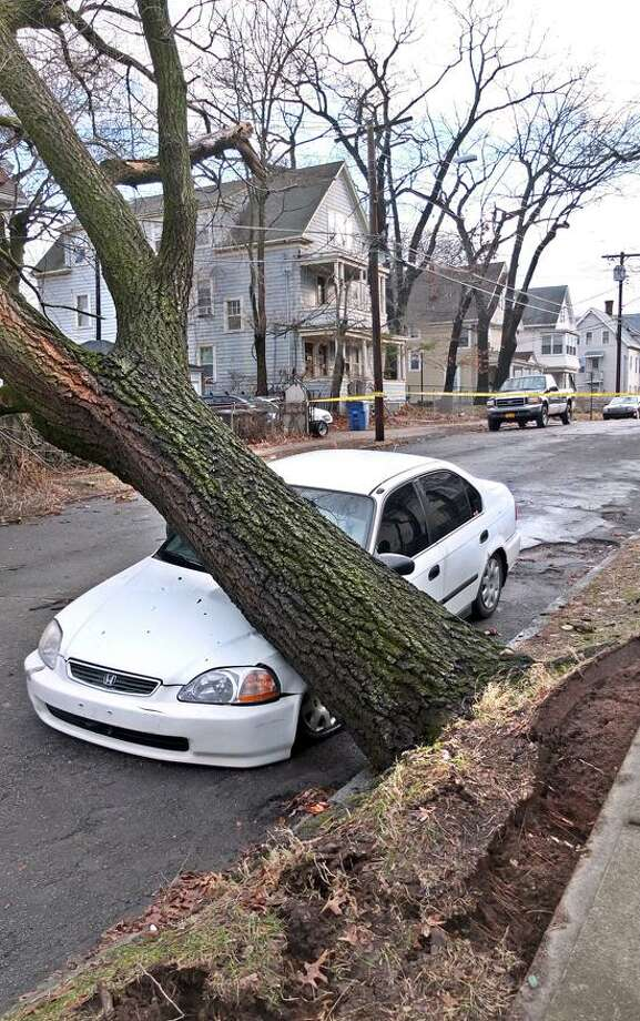 New Haven-- A large tree sits on a car along Irving Street in New Haven after it was blown over by high winds early Thursday morning. The tree was sitting on power lines so the New Haven Fire department had the road closed near the intersection of Ella Grasso Blvd., until it could be removed. Photo-Peter Casolino 1/31/13