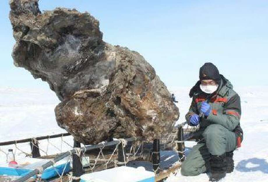 A researcher in Yakutsk on May 13 next to a carcass of a female mammoth found on an island in the Arctic Ocean.