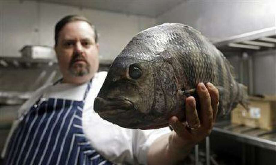 """In this photo taken Thursday, June 13, 2013, James Clark, Executive Chef at Carolina Crossroads Restaurant holds a fresh sheepshead fish ready for preparation in his kitchen in Chapel Hill, N.C. Chefs such as Clark go beyond the usual recommendation to eat small, lower-food-chain fish like sardines, and instead delve full force into little-known local catches that many anglers regard as nuisance or """"trash"""" fish. (AP Photo/Gerry Broome) Photo: AP / AP"""