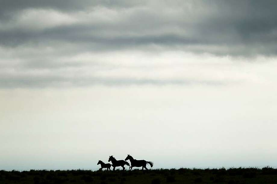 Horses in a field gallop away from the sound of motorcycles competing in the 9th stage of the 2013 Dakar Rally from Tucuman to Cordoba, Argentina, Monday, Jan. 14, 2013. The race finishes in Santiago, Chile, on Jan. 20. (AP Photo/Victor R. Caivano) Photo: ASSOCIATED PRESS / AP2013
