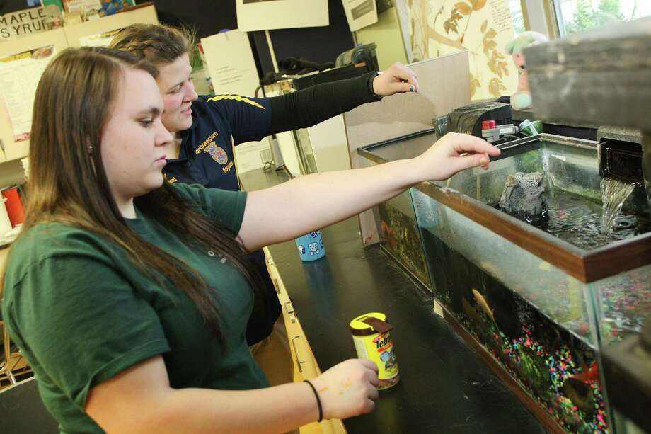 "Dispatch Staff Photo by JOHN HAEGER <a href=""http://twitter.com/oneidaphoto"">twitter.com/oneidaphoto</a> Ashley Findlay VVS FFA and Casey Watson FFA Vice President Northwestern Regional,  tend to fish in the Ag room at VVS on Friday Feb.8 2013 in Verona."