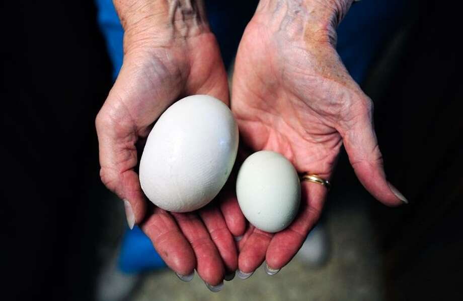 "Cookie Smith shows off a normal egg and a ""super egg"" Wednesday, May 30, 2012, in Abilene, Texas. Cookie Smith went to collect eggs from her three laying hens on Monday afternoon, and discovered one normal egg and one ""super egg"" in her coop. (AP Photo/The Abilene Reporter-News, Greg Kendall-Ball) Photo: AP / The Abilene Reporter-News"