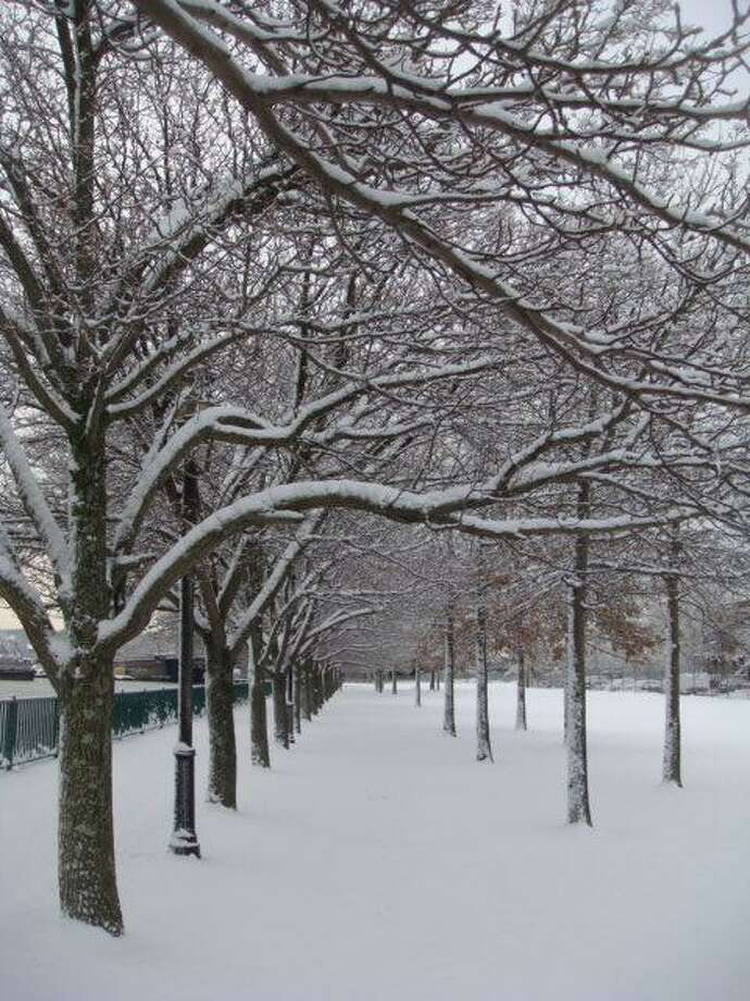 Tassanee Shevavesh submitted this photo of the scene in Quinnipiac Park in New Haven.