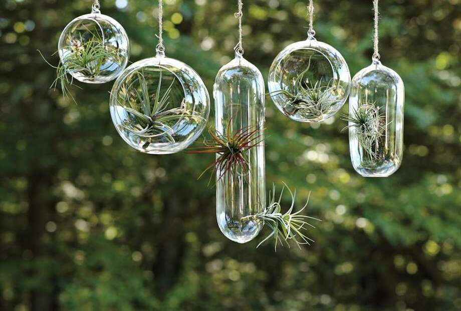 "This product image courtesy of <a href=""http://Westelm.com"">Westelm.com</a> shows Shane Powers' hanging glass vases. These hanging glass bubble vases hold plants such as air ferns, water lilies and succulents. They introduce some welcome greenery to rooms and are easy to look after.  (AP Photo/Westelm.com) Photo: AP / AP2010"