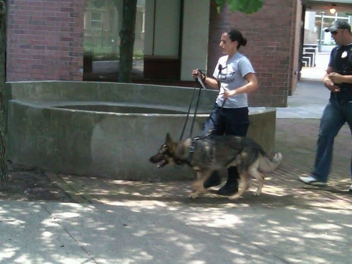 Police used a dog to try to track a man who allegedly robbed a New Haven bank. Photo by William Kaempffer