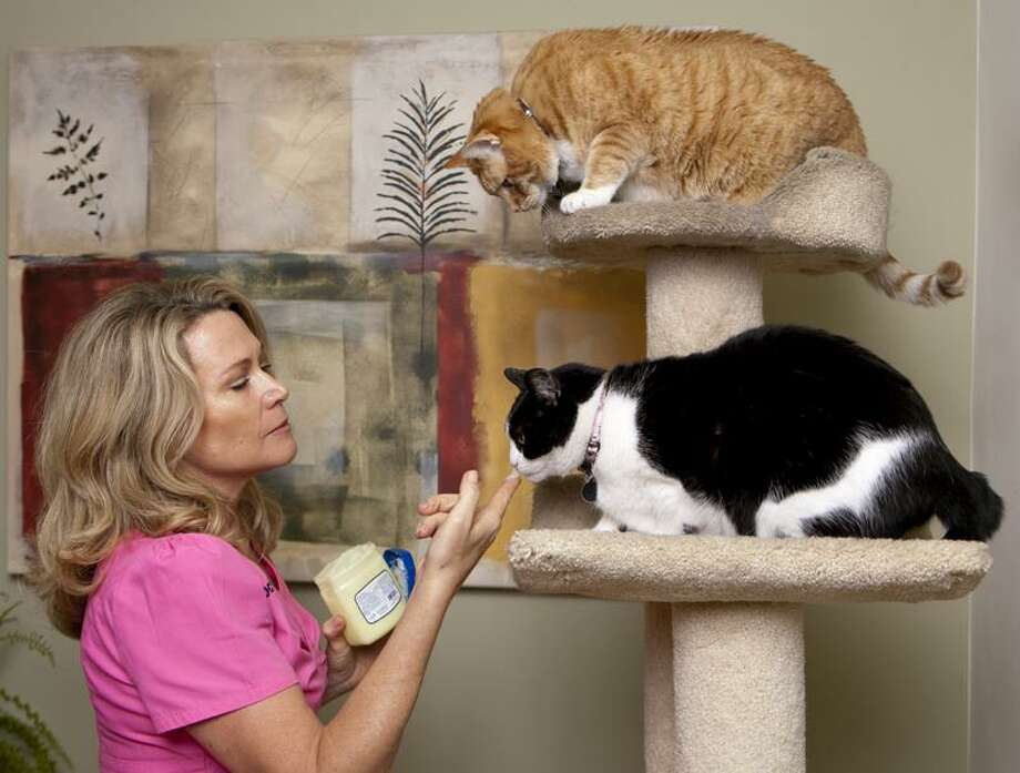 Damian Dovarganes/Associated Press photo: Dr. Karen Halligan gives a dab of petroleum jelly to her cats Kinky, bottom, and Nathan at her home in Marina del Rey, Calif. A number of over-the-counter dietary supplements such as Petromalt can be given to cats to help prevent hairballs. Photo: AP / AP