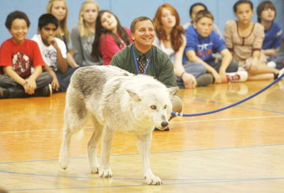 Dispatch Staff Photo by JOHN HAEGER (Twitter.com/OneidaPhoto) Students watch as one of the wolves from Mission: Wolf makes its way around the gym during a presentation at Otto Shortell Middle School on Friday, Nov. 4, 2011.