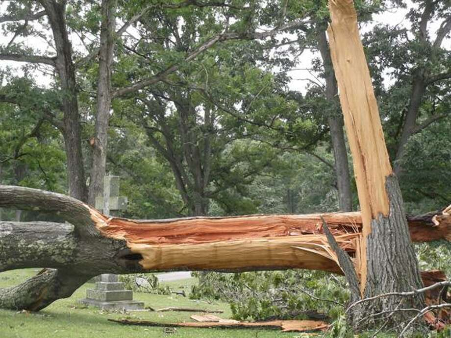 MICHELLE MERLIN/Register Citizen Strong winds from Friday's storm split several trees at Hillside Cemetery.