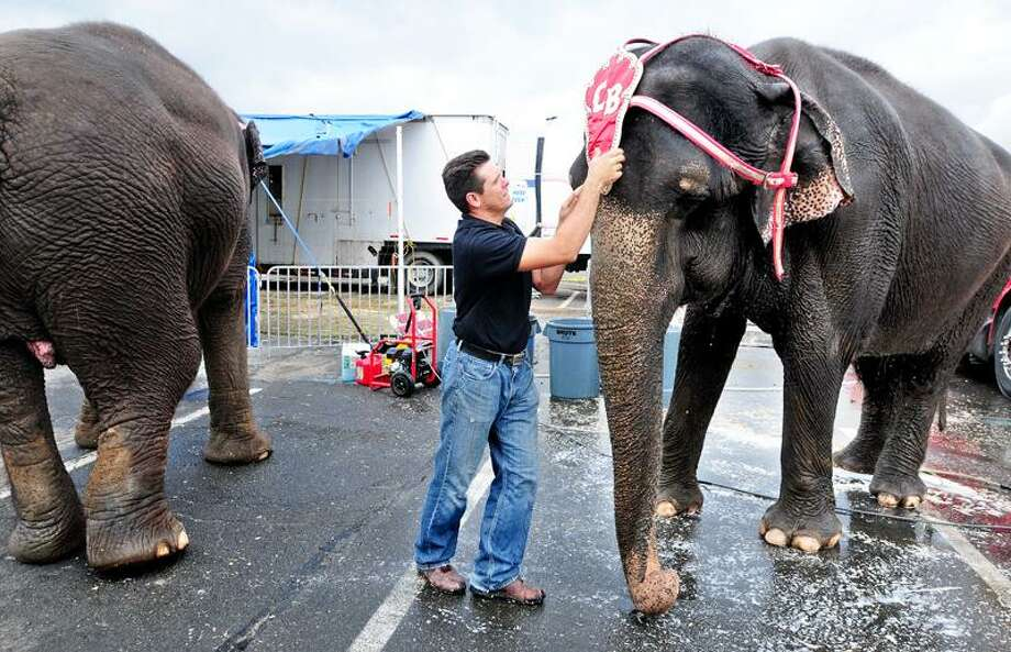Elephant handler John Walker III puts a headdress on Kelly before the Cole Bros. Circus of the Stars show at Westfield Connecticut Post mall in Milford Tuesday. Arnold Gold/Register