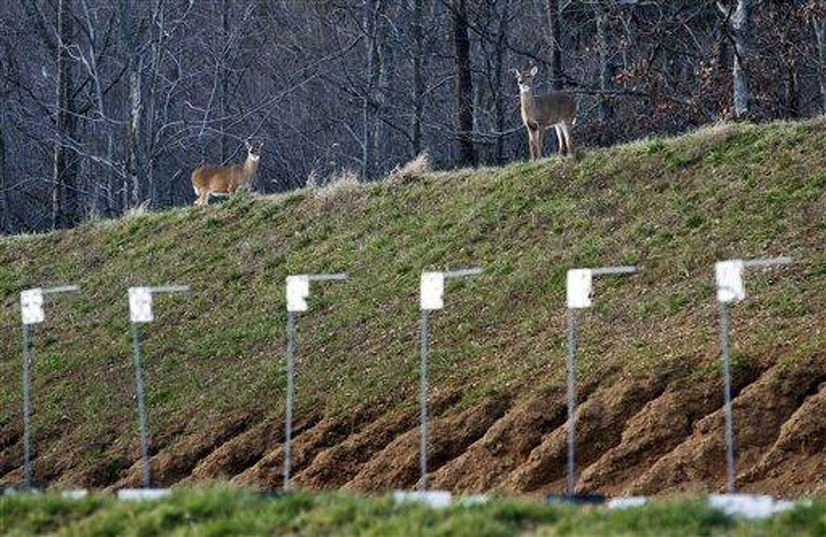 Deer roam atop a berm surrounding the shooting range at the FBI Academy in Quantico, Va., Monday, Dec. 19, 2011. The 547-acre FBI Academy, where some of the nation?s best marksmen fire off more than 1 million bullets every month, happens to be one of the safest places for deer during hunting season. (AP Photo/Manuel Balce Ceneta)