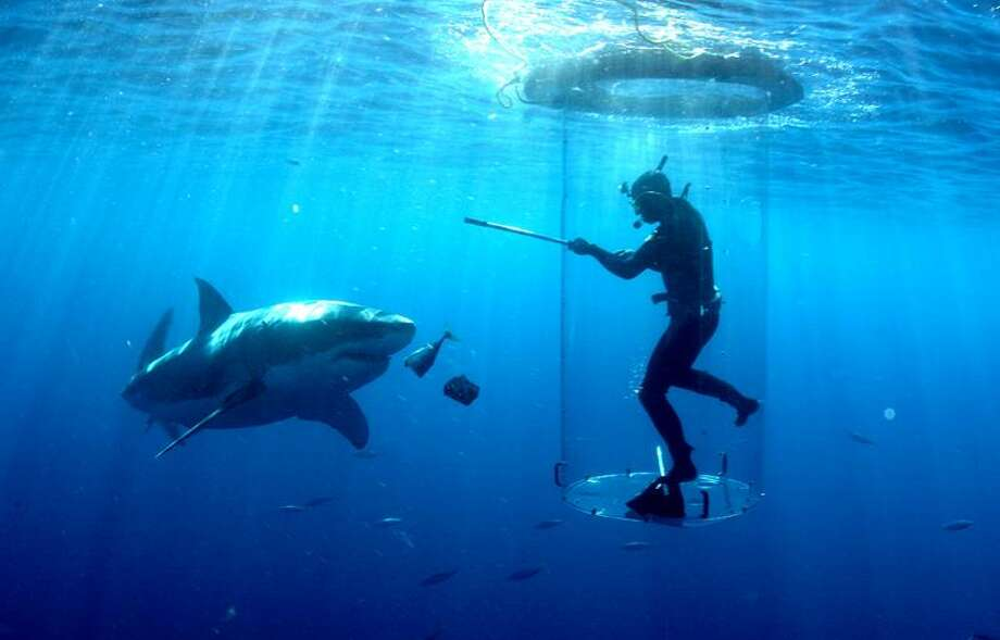 """Discovery photo: Chris Fallows offers a shark a magnetic field in the """"Shark Week"""" special """"Great White Invasion"""" at 9 p.m. Sunday on Discovery."""