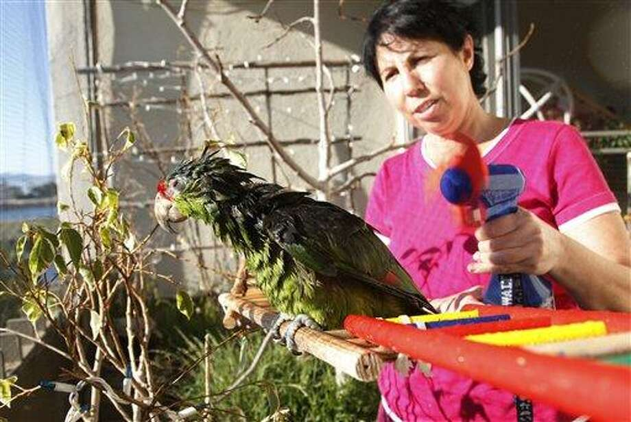 """In this photo taken on Tuesday, Feb. 8, 2012, Mira Tweti, Executive Director, National Parrot Care & Cage Xchange, gives a bath to a rescue parrot named """"Liberty,"""" in her apartment in the Marina Del Rey area of Los Angeles. (AP Photo/Damian Dovarganes) Photo: AP / AP"""