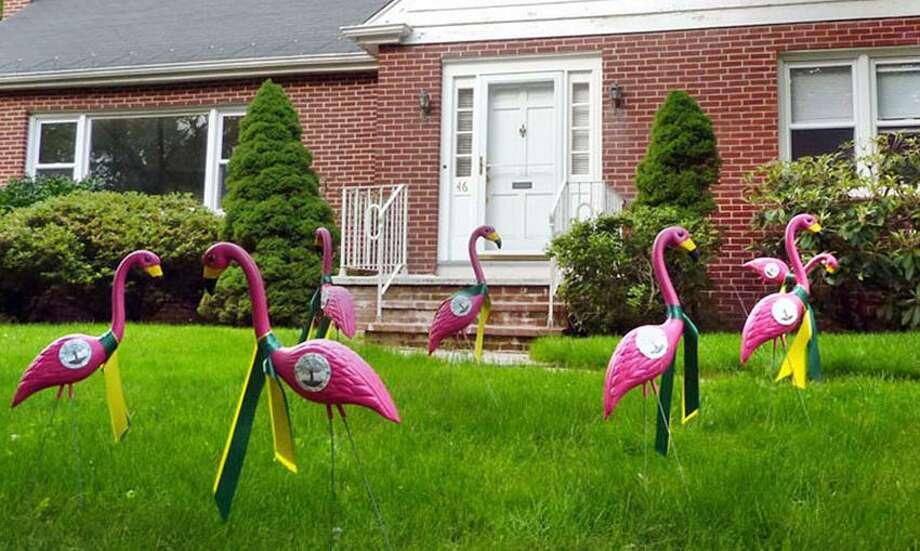 Flocked at 46 kohary drive New Haven.