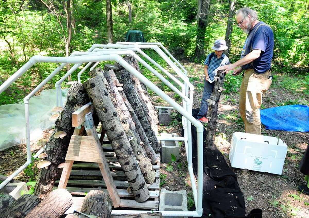 Arnold Gold/New Haven Register photo: Bobcat Carruthers of Hamden gets help from Simon Medina-Pinango, 8, who records the number of mushrooms growing on each log at the New Haven Bioregional Group site.