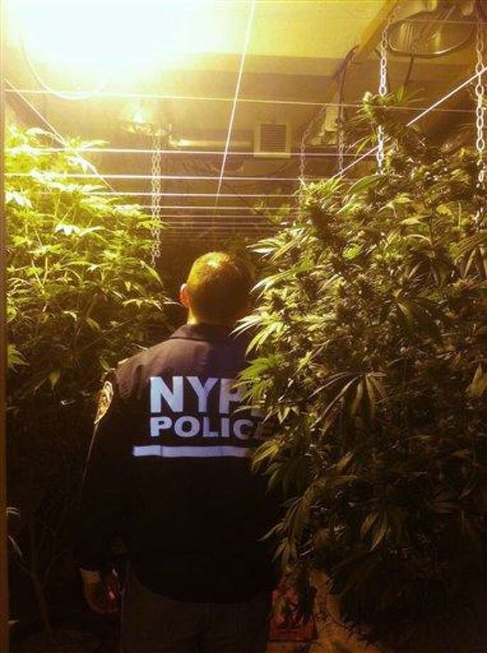 In this photo provided by the New York City Police Department, an NYPD lieutenant walks through plants at a large indoor marijuana growing operation in New York Tuesday. Police shuttered the five story building and arrested three people. Associated Press Photo: AP / AP