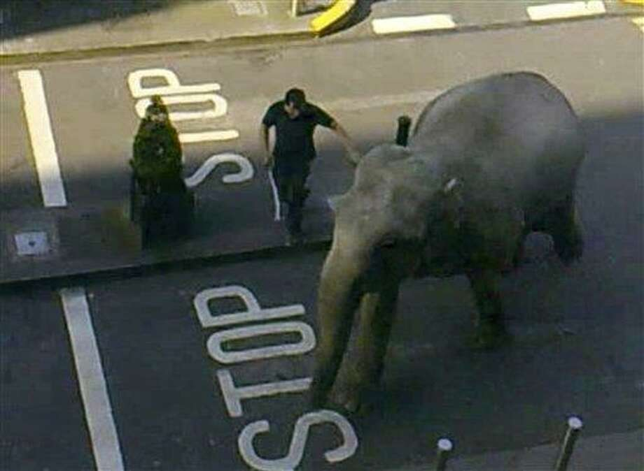In this image taken from amateur video, showing zoo keepers trying to guide an elephant away from a coffee shop and to stop it rampaging through the streets of Dublin, Ireland, Tuesday. The 40-year old pachyderm elephant bolted from a nearby circus in southern Ireland on Tuesday, causing some alarm to customers in a coffee shop where keepers caught up with the runaway. No one was injured in the incident. Associated Press Photo: AP / ap