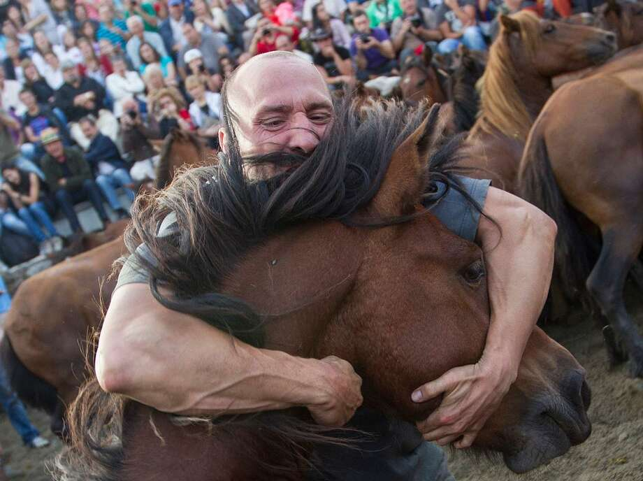 A man grabs a wild horse during the traditional round-up of wild horses in Sabucedo, north-western Spain Saturday July 7, 2012. The round-up and breaking-in of the wild horses, where the mainly young men of the village get a chance to demonstrate their skills, originates from the 16th century. (AP Photo/Lalo R. Villar) Photo: ASSOCIATED PRESS / AP2012