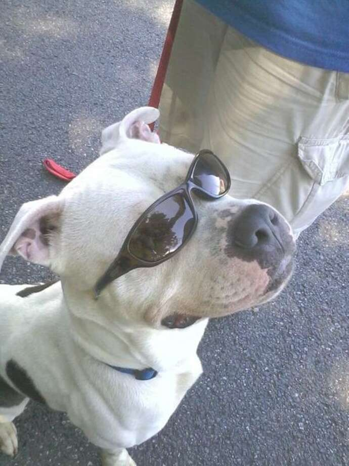 Contributed photo: This snappy dresser will be even cooler with a new bandanna that will be given out to all canines at Yappy Hour.