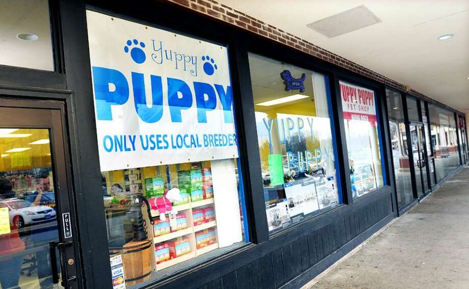 The store, Yuppy Puppy, emphasizes their use of local breeders on a large sign at the entrance to their store on the Boston Post Road in Guilford. Arnold Gold/Register