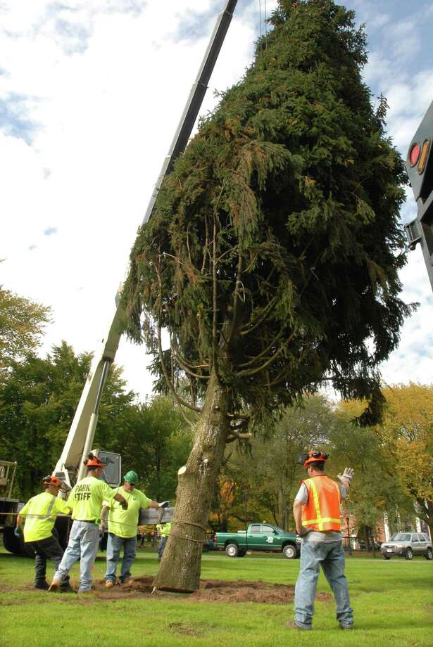In this 2009 file photo, workers from the New Haven Dept. of Park, Recreation and Trees place a 65' Norway spruce from Shelton into its spot on the New Haven Green as the city's holida tree. Photo by Mara Lavitt
