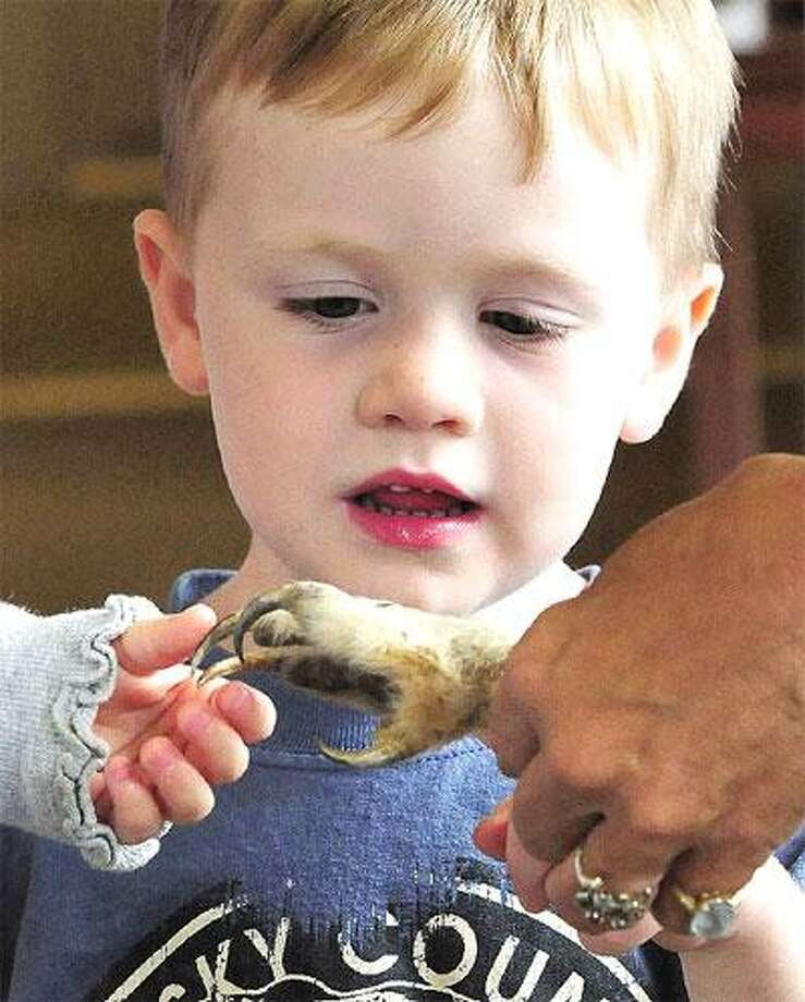 Matthew Cummings, 3, of Milford takes a close look at a great horned owl talon at the Connecticut Audubon Society Coastal Center at Milford Point. (Brad Horrigan/Register)