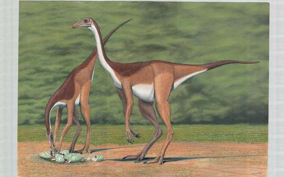 """Princeton University Press photo, Struthiomimus edmontonicus and its brethren will be part of """"Dinosaurs Great and Small"""" at the Peabody on Saturday."""