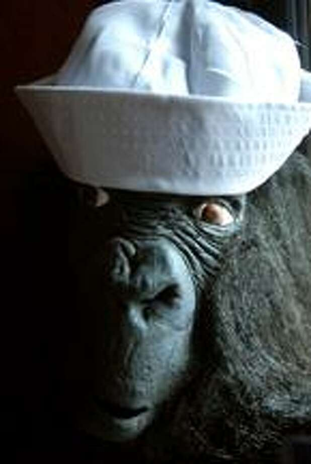 A gorilla in a sailor hat stands at the entrance to Pasta Cosi in Branford publicizing Branford High School's musical, On the Town, on 3/11/2010. (Arnold Gold/Register)