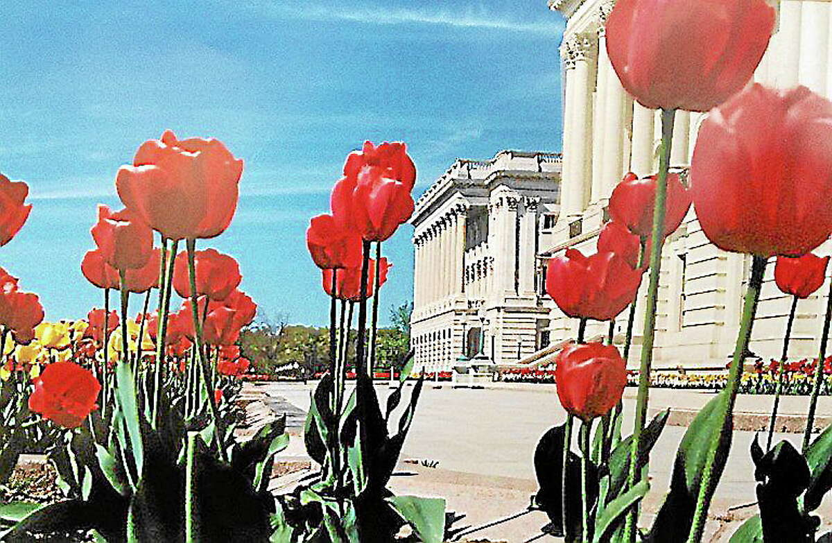 """Submitted photo courtesy of the artistFinalist Sam Boskov's """"Red Tulips"""" from the senior art show."""