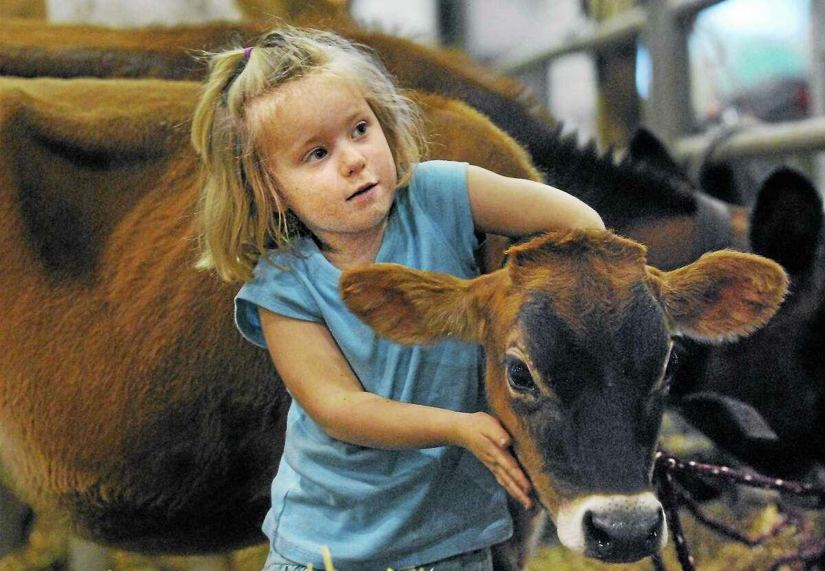 Durham's Gabby Larkin cuddles with Cappucino, a Jersey cow from Deerfield Farm, at the 2012 Durham Fair.