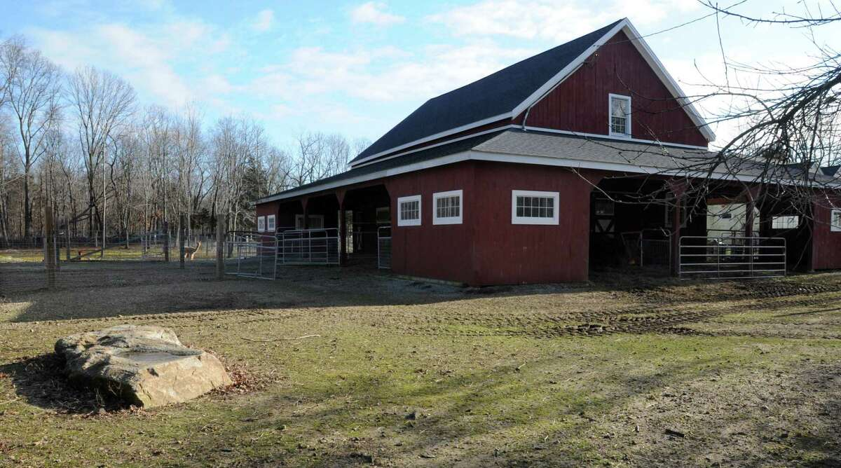 Four alpacas here at Applesauce Acres in the Ivoryton section of Essex were killed on 12/23/11. Photo by Mara Lavitt/New Haven Register12/24/11