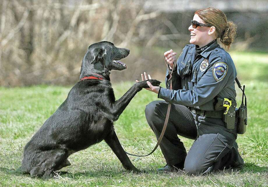 Middletown and Animal Control Officer resident Gail Petras works with Ace, a 5-year-old labrador retriever mix. Photo: Catherine Avalone — The Middletown Press   / TheMiddletownPress