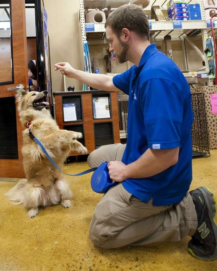 ORANGE-Bob Hannen, of Petsmart, interacts with Atilla, a mixed breed female up for adoption.  Attilla's owners, a couple in their 60's,  lost their home and had to give her up.    Melanie Stengel/Register