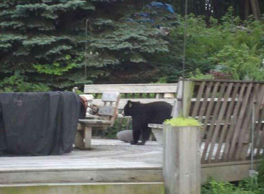 Black bear on Congdon Street. Photo by Don Lemon.