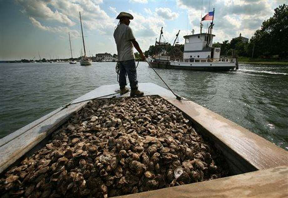 ADVANCE FOR AP MEMBER EXCHANGE - In this July 6, 2007 photo, a fisherman waits with a line to tie up the boat, with a days catch of oysters, on the Housatonic River in Stratford, Conn.  The good news is oysters in Connecticut are about as safe as just about every other kind of food you can name. The bad news is those in the oyster industry, from harvesters to restaurant chefs, have to be ever-vigilant for Vibrio parahaemolyticus, a bacterium that was all but unknown a few years back.  (AP Photo/Connecticut Post/Brian A. Pounds)   MANDATORY CREDIT Photo: AP / The Connecticut Post