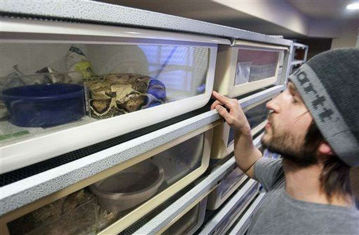 Thomas Cobb shows off several of his exotic reptiles that he keeps in a special basement room of his home Friday, April 26, 2013 in Cottonwood Heights, Utah. Cobb has been ordered by police to get rid of all but one of his 29 exotic boa constrictor snakes because he doesn't have an exotic pet permit. (AP Photo/The Deseret News, Scott G. Winterton) SALT LAKE TRIBUNE OUT; MAGS OUT