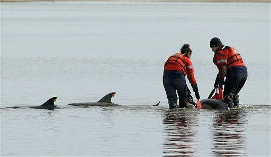 Using a sling Linda D'eri, left, and Misty Niemeyer, members of an International Fund for Animal Welfare rescue team, carry one of 11 dolphins stranded ion a mud flat during low tide in Wellfleet, Mass., Tuesday. Ten of the dolphins were saved and one perished during the event. There have been 177 dolphins stranded in the area since Jan. 12 and 53 have been successfully released. Associated Press Photo: AP / AP