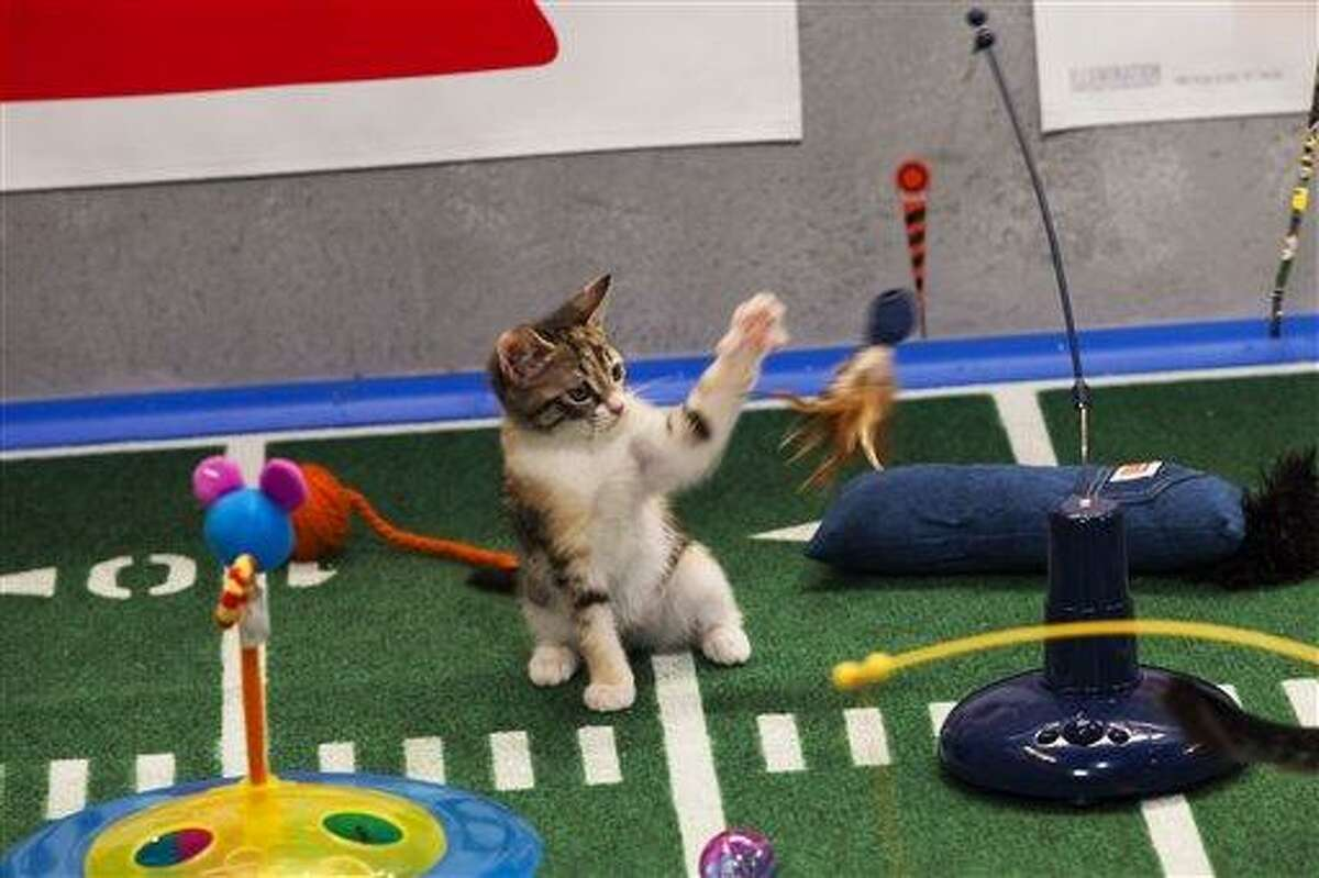 """This undated publicity photo provided by Animal Planet shows the Kitty half time show during """"Puppy Bowl IX,"""" in New York. The """"Puppy Bowl,"""" an annual two-hour TV special that mimics a football game with canine players, made its debut eight years ago on The Animal Planet. The show provides national exposure to the shelters across the country that provide the puppy athletes and the kittens that star in the halftime show, and introduces viewers to the different breeds and animals that need homes, animal workers say. (AP Photo/Animal Planet, Keith Barraclough)"""