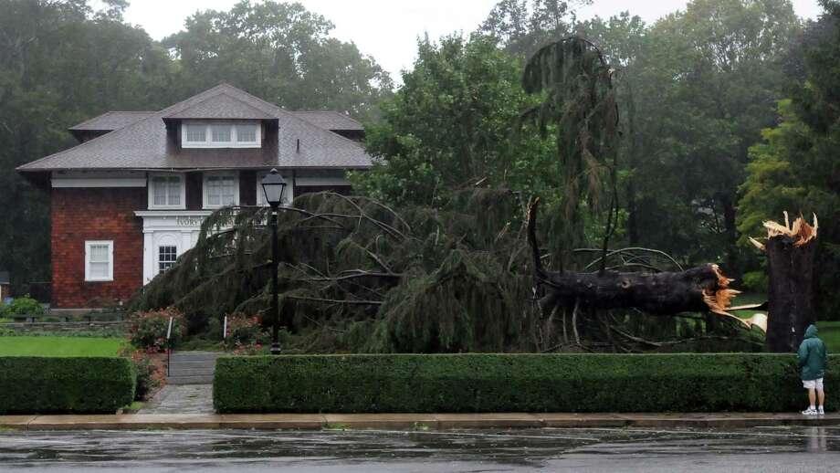Hurricane Irene. A landmark tree downed in front of the Ivoryton Playhouse Photo by Mara Lavitt/New Haven Register8/28/11
