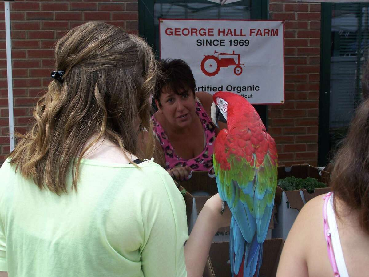 Brenda Glazier, of Simsbury, a volunteer with the George Hall Farm, meets Inca, a parrot owned by Figen Agis of Middletown at the North End Farmers Market Friday.