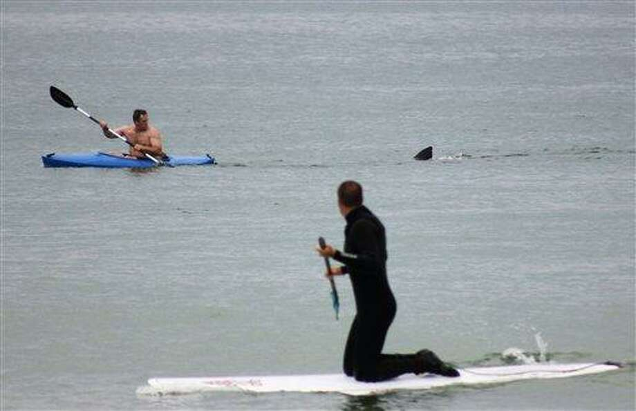 Walter Szulc Jr., in kayak at left, looks back at the dorsal fin of an approaching shark at Nauset Beach in Orleans, Mass. in Cape Cod on Saturday, July 7, 2012. An unidentified man in the foreground looks towards them. No injuries were reported. The previous week, a 12- to 15-foot great white shark was seen off Chatham in the first confirmed shark sighting of the season according to a state researcher. Two more sightings were reported Tuesday, July 2, 2012. The same waters are filled with seals, which draw the sharks because they are a favorite food of the animal. (AP Photo/Shelly Negrotti) Photo: AP / 2012 AP