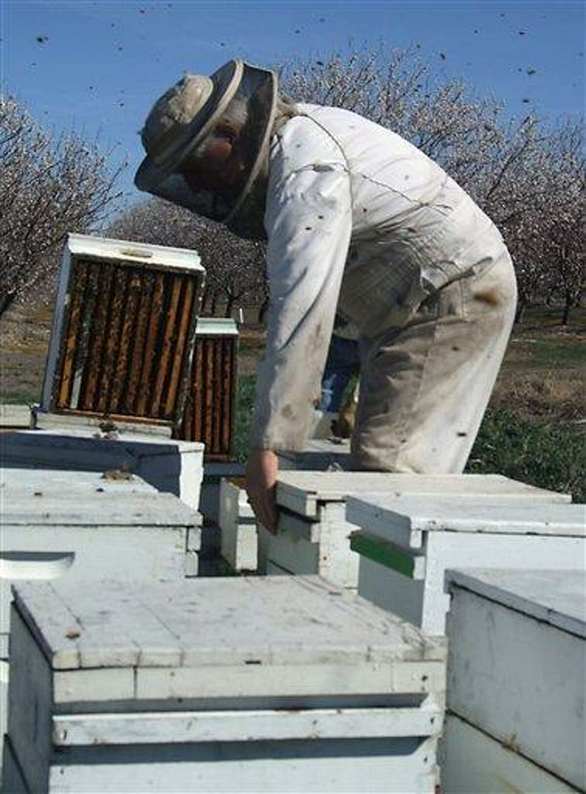 Beekeeper Orin Johnson checks on colonies pollinating an almond orchard Feb. 23 northwest of Waterford, Calif. A mild and dry winter that gave insects a reprieve from certain death now threatens to make spring a tough season for many U.S. farmers. Associated Press