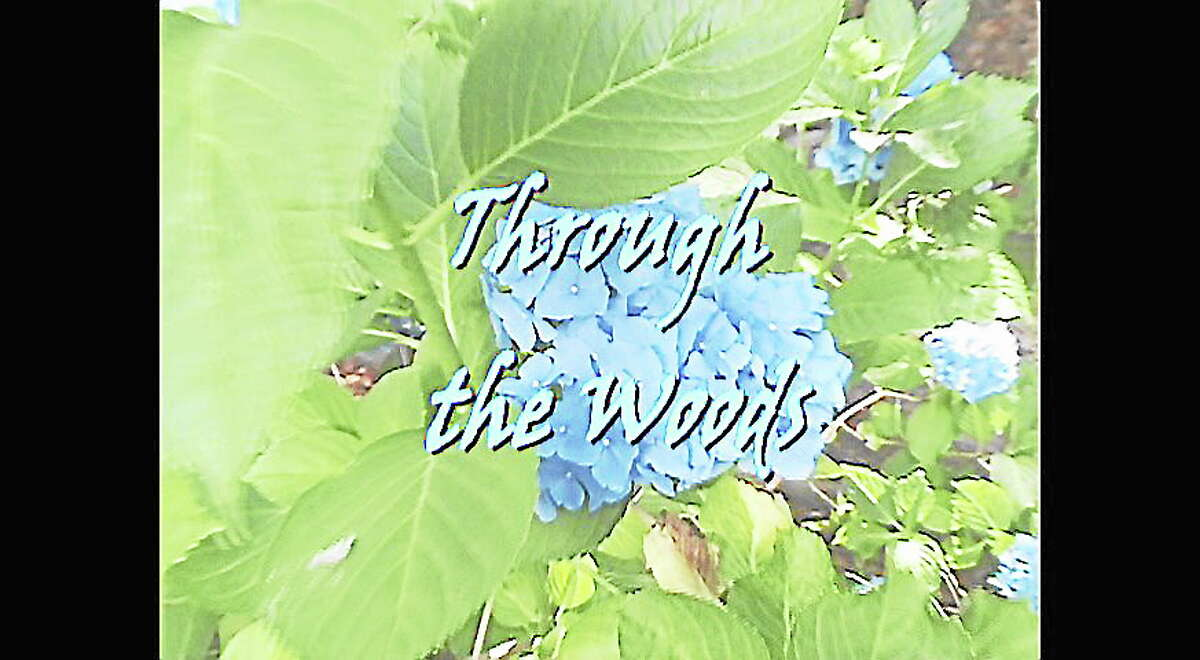 """Title frame from """"Through the Woods."""""""